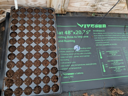 Kohlrabi seed flat warming on the mat